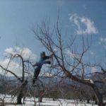 りんご、桃農家としての初めてのスタート 軌跡1
